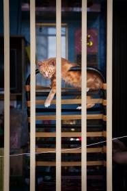 Saigon cat photograph - Adam Robert Young