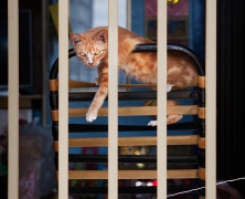Saigon cat photograph - Adam Robert Young